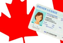 Canadian Driving Licence Graphic