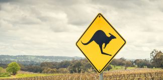 Kangaroo road sign in Australia